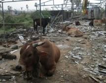 ISKCON Visakhapatnam después de la tormenta ciclónica Hudhud