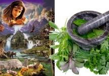 Cinco plantas medicinales que pueden mejorar la salud