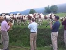 A las Vacas les gusta el Jazz…