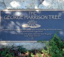 Un pino plantado en memoria de George Harrison murió infectado por escarabajos