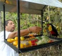 Proyecto de Liberación de Aves cautivas en Nova Gokula Brasil