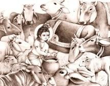 """ISKCON Lanza """"Om Sri Surabhi"""" Campaña de protección de la Madre Vaca"""